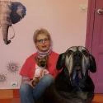 Photo de Clinique vétérinaire